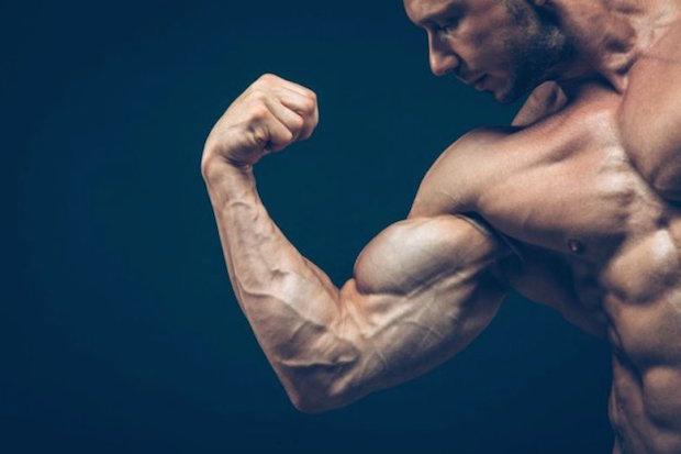 Comment la testostérone agit-elle sur l'organisme humain?