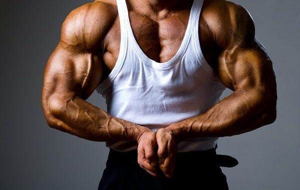 Comment fonctionne la testostérone sur le corps humain ?